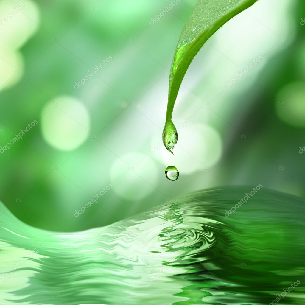 Green leaf with drop of water on green sunny background — Stock Photo #3385059