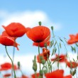 Poppy against blue sky — Stock Photo