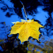 Yellow leaf in blue water — Stock Photo