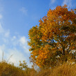 Autumn tree and sky - Stock Photo
