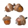 Different acorns isolated on white — Stock Photo