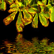 Autumn chestnut leaves isolated on black with reflection - Stock Photo
