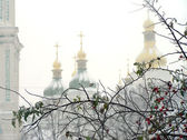 Brunches of dog rose in snow against the church — Stock Photo