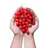 As mãos segurando a cereja vermelha, isolada no branco — Foto Stock