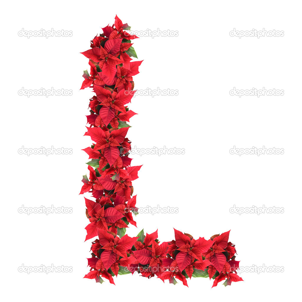 Letter from red christmas flowers isolated on white — Stock Photo #3471681