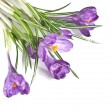 Crocus bouquet isolated on white - Stok fotoğraf