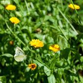 Bloemen met vliegende vlinder — Stockfoto