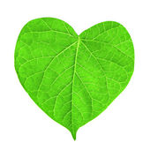 Green leaf in shape of heart isolated on white — Stock Photo