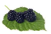 Blackberry en hoja verde aislada en blanco — Foto de Stock