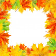 Frame from autumn leaves isolated on white — Stock Photo #3902320