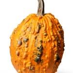 Pumpkin isolated on white — Stock Photo