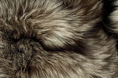 Background - beautiful polar Fox fur — Stock Photo