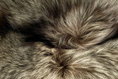Background - beautiful polar Fox fur — Stock Photo