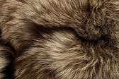 Polar Fox fur. Useful as texture — Stock Photo