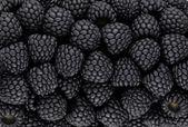 Black blackberry texture or background — Stock Photo