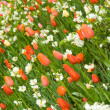 Angle shot of flowerbed in Keukenhof park — Stock Photo