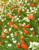 Angle shot of flowerbed in Keukenhof park — Stock Photo
