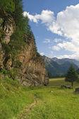 High Pejo valley on summer — Stock Photo