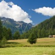 alpine landscape in pejo valley — Stock Photo