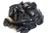 Fresh mussels — Stock Photo