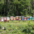 Foto Stock: Bee hives