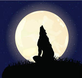 The lonely wolf sits on a rock — Stock Vector