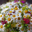 Bouquet of wild flowers — Stock Photo #3602190