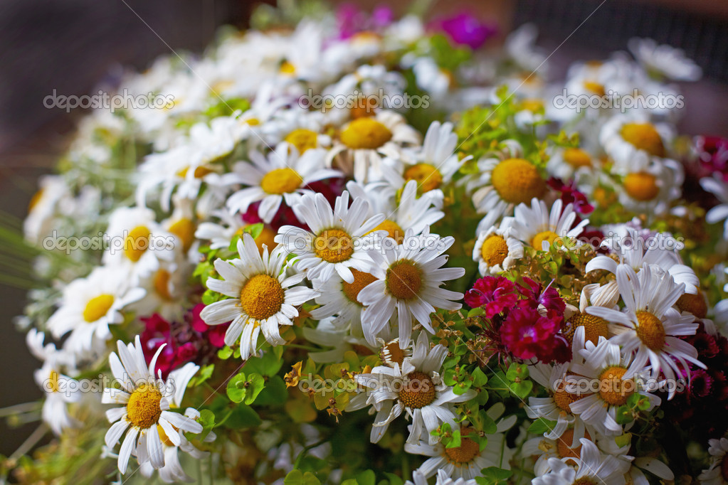 Красивые картинки букеты полевых цветов красивые