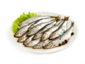 Anchovy — Stock Photo