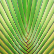 Big palm tree leaf - Stock Photo