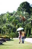 View of couple a back under umbrella wal — Stock Photo