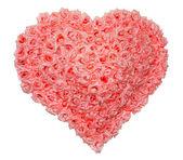 Alla hjärtans dag rose — Stockfoto