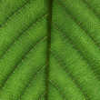 Green sheet close up - Foto Stock