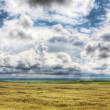 Wheaten field — Stock Photo #3167359