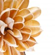 Paper Flower Border - Stock Photo