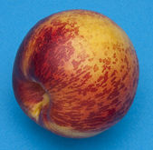 Nectarine on Blue — Stock Photo