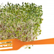 Eating Healthy Alfalfa Sprouts — Stock Photo