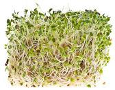 Comiendo saludable alfalfa sprouts — Foto de Stock