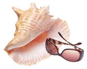 Conch Shell and Sunglasses — Stock Photo