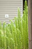 バック グラウンドで家と生い茂った芝生 — ストック写真