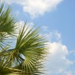 Cloudscape with Palm Trees — Foto Stock