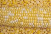 Fresh and Frozen Corn — Stock Photo