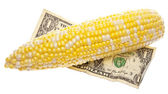 Cost of Corn — Stock Photo