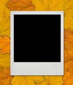 Blank Polaroid card, autumn design — Stock Photo