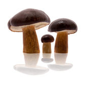 Three mushrooms, isolated — Stock Photo