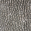 Wooden bark background — Stock Photo