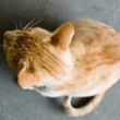 The red cat looks aside. The top view. — Stock Photo
