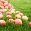 Stock Photo: Apples on the grass