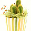 Decorative cactus — Stock Photo #3108215