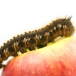 Caterpillar on the top of a red apple — Stock Photo